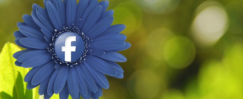 Facebook Buchclub: Kurzer Hype, langer Leerlauf
