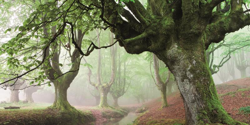 Wenn Bilder von Bäumen die Seele baumeln lassen