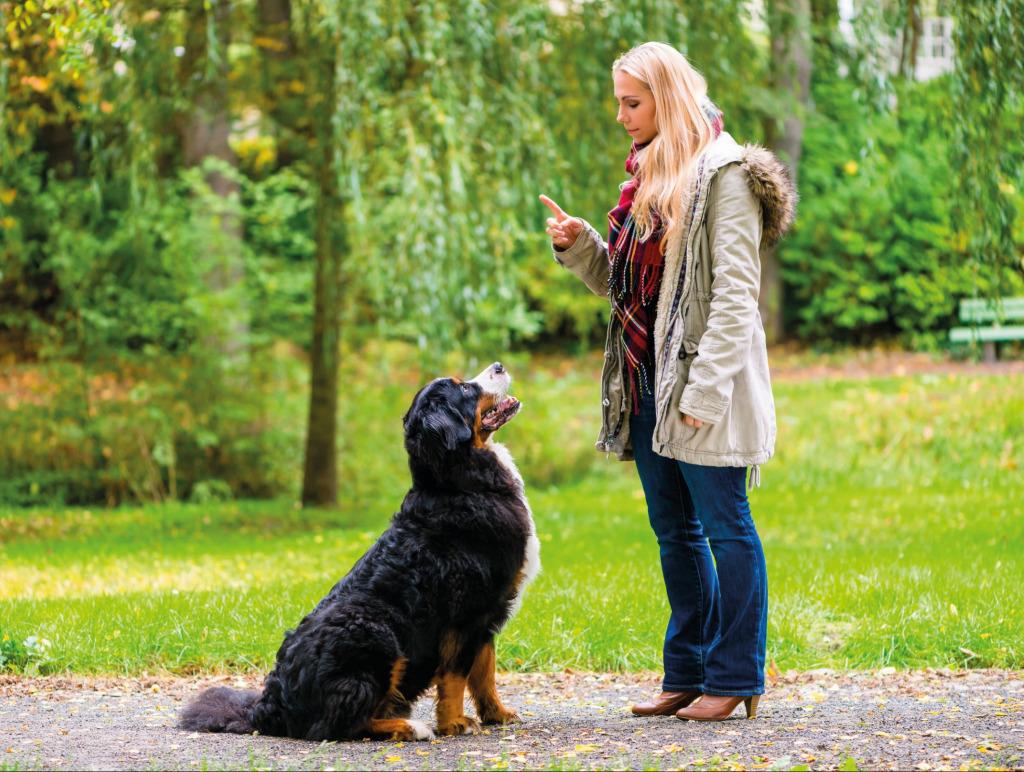 Guter Rat zur Hundeerziehung (Foto: 123tf.com)
